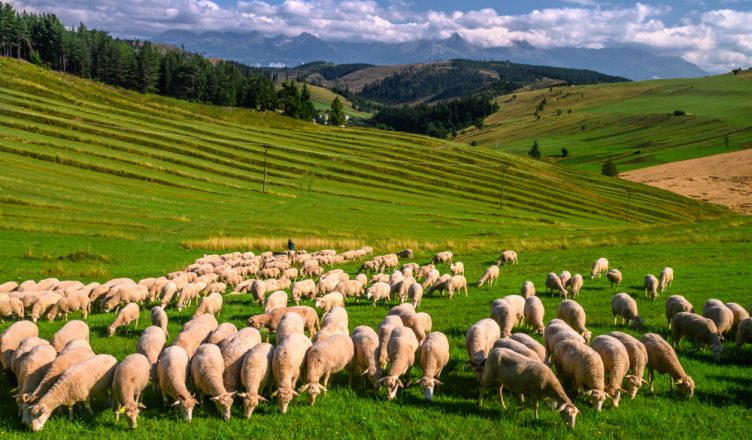 ideálna dovolenka na slovensku